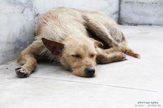 https://flic.kr/p/DNsQd9 | Barcelona | www.instagram.com/dieter_michalek www.facebook.com/fotografie.by.dieter.michalek #barcelona #dog #dogs #hund #spain #spanien #fotografie #fotografia #photography #perro #cien
