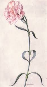 Image result for carnation outline tattoo