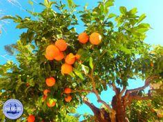 Natur auf Kreta - Zorbas Island apartments in Kokkini Hani, Crete Greece 2020 November Holidays, Relaxing Holidays, Greece Holiday, Crete Greece, Beach Holiday, Stuff To Do, Hani, Island, Apartments