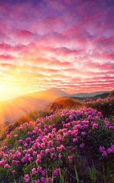 Pink sunrise.
