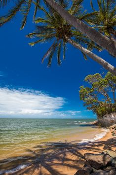 Palm trees on the south end of Suttons Beach, Redcliffe, Brisban photo by mvaligursky on Envato Elements Coast Australia, Australia Travel, Desert Climate, Go Skiing, Travel Around, Time Travel, Wonders Of The World, Palm Trees, Brisbane Queensland