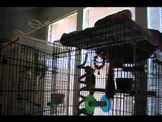 """Bahahahahahhahahahaha Parrot was caught singing """"Let the bodies hit the floor"""""""