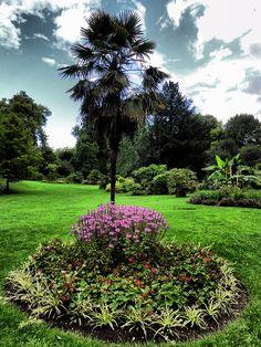 Battersea Park Sub Tropical Garden - Sentimental to me