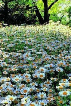Ромашковая полянка - анимация на телефон от acbka №1496431 Flowers Nature, Love Flowers, Gifs, Glitter Gif, Beautiful Gif, Nature Pictures, Scenery, Relax, Animation