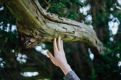 Touch photo by Paul Rysz ( on Unsplash Lucy Pevensie, Susan Pevensie, Edmund Pevensie, Adam Parrish, Misty Day, Meditation, Anne Shirley, Chronicles Of Narnia, Anne Of Green Gables