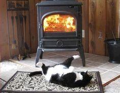 猫と冬の画像 02|ねこLatte+