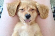 The 33 Most Joyous Things That Have Ever Happened #Animals