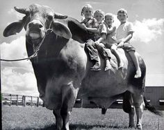 """Riding High on the 1947 Houston Fat Stock Show Champion Bull Manimoso Manso 1947  De: J.D. Hudgins Inc."