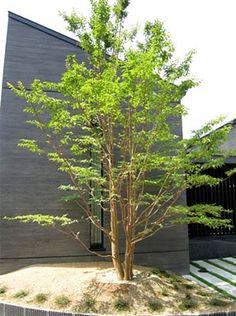 ハイノキ Japanese Plants, Japanese Garden Design, Plant Species, Photo On Wood, Green Garden, Plant Decor, Trees To Plant, House Plants, Landscape Design