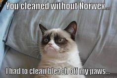 norwex panda meme - Google Search