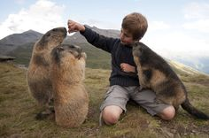boy with alpine marmots 10
