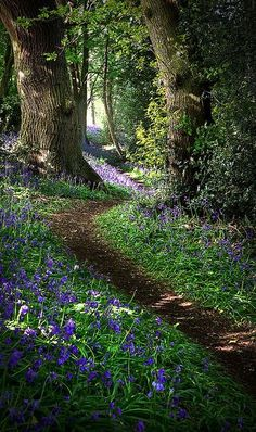Pretty photo of a nature walking trail with purple flowers in a peaceful forest in Derbyshire, England by Matt Oliver photography. Beautiful World, Beautiful Places, Beautiful Forest, Woodland Garden, Walk In The Woods, Into The Woods, Belle Photo, Beautiful Landscapes, Wonders Of The World