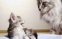 Want to know how to introduce a new cat to an old cat? Read this article from Animal Planet to learn how to introduce a new cat to an old one.