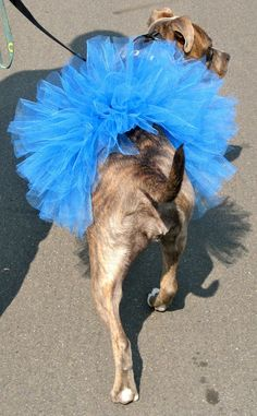 DIY Dog Tutu Tutorial step-by-step pictorial
