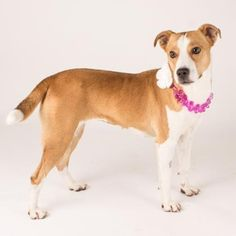 Telley is available for adoption at our Mission campus!