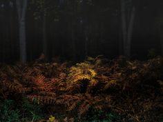 Into the wild - Elveden forest