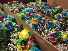 """Our new """"Rainbow Roses""""! #charlotte #florist #southernblossom #roses #rainbowroses"""
