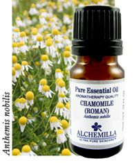 Chamomile Essential Oil is a traditional favorite for calming, balancing and promoting deep relaxation.    Add stress-relieving Chamomile to massage oils, therapeutic baths, compresses and mood perfumes. It is calming and soothing on inflamed or irritated skin.    Blends well with: Bergamot Essential Oil, Clary Sage Essential Oil, Lavender Essential Oil, Jasmine Essential Oil, Rose Essential Oil.