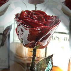 Beauty and the Beast Forever Rose