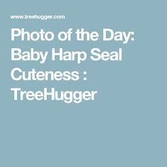 Photo of the Day: Baby Harp Seal Cuteness : TreeHugger Baby Harp Seal, Wildlife Day, Vivid Imagery, Science And Nature, Coffee Shop, Cute, Coffee Shops, Baby Seal, Kawaii
