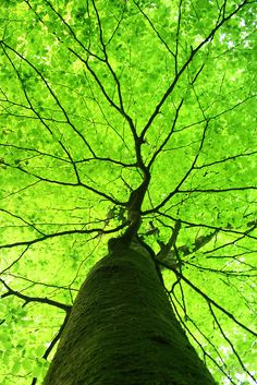 green canopy tree organic nature