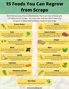 15 FOODS THAT CAN BE RE-GROWN - - Don't throw away those old potatoes! Or those romaine lettuce ends! There are lots of foods you can regrow from scraps — it's easy and free! Growing Veggies, Growing Plants, How To Grow Plants, Growing Lettuce, Regrow Green Onions, Kale Plant, Mint Plants, Potted Plants, Indoor Plants
