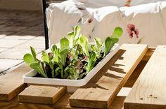 Detalle jardinera #mesa reciclada con un #palet. #huerto