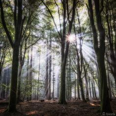 Starburst by tvurk on DeviantArt Beautiful Places, Beautiful Pictures, Tree Tunnel, Web Design, Winter Trees, Planet Earth, Tree Of Life, Nature Photography, Deviantart