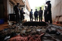 Thai authorities raided the temple, which operated as a zoo, after it was accused of illegal wildlife trafficking. Parks officials have been…