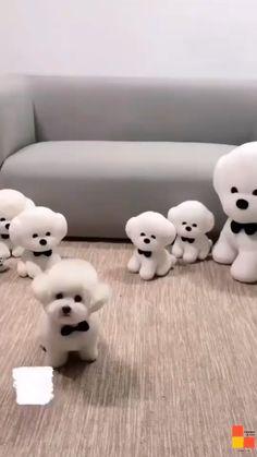 Cute Teacup Puppies, Cute Baby Puppies, Cute Animals Puppies, Cute Wild Animals, Baby Animals Super Cute, Cute Little Animals, Cute Small Dogs, Cute Funny Dogs, Cute Funny Animals