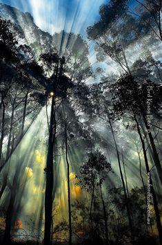 Bushfire ::   By: Ford Kristo