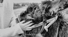 VPV weddings, y nuestro vecino, Algodón, os deseamos un feliz 2016 vpvweddings.com #novia #bodasenponferrada #weddingfilms #bodasengalicia #love #bodasunicas #eventos #bodas #vpvweddings #boda #a7s #bodasenpontevedra #bodasenorense #videosdeboda #bodasencoruña #video #casateconvpv #weddingcinema #novias #sony #donkey #weddinginspiration #weddingplanner #burro #noviasvpv #videographer #cinedebodas #cine #weddingfilm #cinematografiadebodas