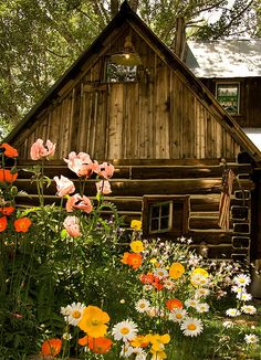 For you dad! I hope you get to have your cabin with daisies in Heaven.     Poppies & Daisies Cabin by SiriusEnergy,