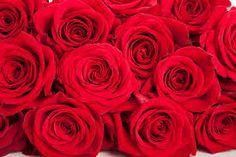 Happy Valentines Day 2015 Roses | Happy Valentine Day 2015