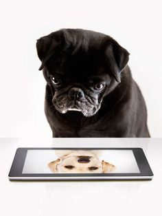 Best Apps for Pets - Technology for Pets - Country Living.                                   RP by Linda HAMMERSCHMID for.           DWP-DOG PRODUCTS (Facebook +.            www.dwp-dwp.com)