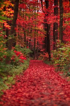 Autumn Trail The post Autumn Trail autumn scenery appeared first on Trendy. Beautiful World, Beautiful Places, Beautiful Pictures, Fall Pictures, Nature Pictures, Fall Pics, Landscape Photography, Nature Photography, Autumn Scenes