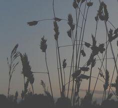 Setting Sun Print on FineArtAmerica.com