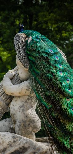 Peacock perched on a statue, The Royal Bath Park, Warsaw, Poland