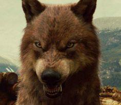 human lion my favorite vampires and werewolves pinterest. Black Bedroom Furniture Sets. Home Design Ideas