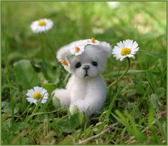 ✿~So Adorable...Daisy Bear!~✿