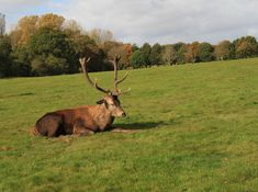 Photo by Ivana Piskáčková Rural Area, Deer, National Parks, Wildlife, Animals, Animales, Animaux, Animais, Reindeer