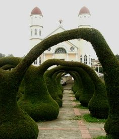 Funky topiary arches.