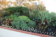 New Succulent plantings at Front Garden by David Feix Landscape Design, via Flickr