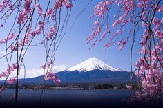 "11-Day Sakura Cherry Blossom Tour from Tokyo 			Whether you're a seasoned traveler or a first time visitor to Japan, we recommend ""Sakura tour 11days"" itinerary, our most popular tour. This tour gives you a sampling of all that Japan has to offer, from unique locales to ""must see"" tourist attractions in Tokyo, Kyoto, Hiroshima and Koyasan. Main attraction of this tour is visiting 8 World Heritage sites of UNESCO. Mt.Fuji, Kyoto, Nara, Himeji Castle, Iwami Ginzan (silver mine),..."