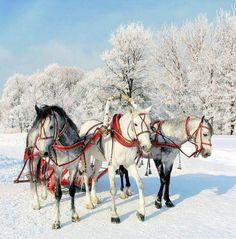 """Troika""  3-Horse Sled"