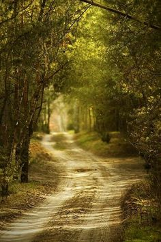 USA Road Trip Ideas and Tips. If you are looking to head out on a road trip, there are a lot of different places you could go. Below, we will be going over some of the top USA road trip Back Road, Winding Road, Parcs, Take Me Home, Belle Photo, The Great Outdoors, Countryside, Trail, Beautiful Places