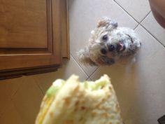 I see you eyeing my cheesy gordita crunch...