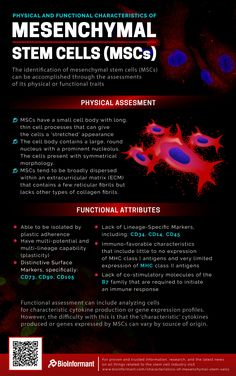 Physical And Functional Characteristics Of Mesenchymal Stem Cells (MSCs) Basic Anatomy And Physiology, What Is Stem, Tissue Engineering, Cord Blood Banking, Stem Cell Research, Critical Care Nursing, Biomedical Science, Medicine Student, Nursing School Tips