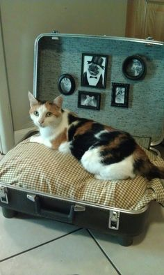 Upcycled pet bed... using an old suitcase, men's shirt, pillow, picture frames, curtain rods and rings and an old kitty!