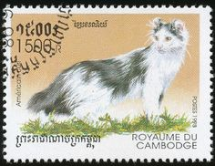 Cambodia 1998 Cat Stamps - American Curl